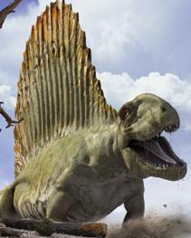 Dimetrodon2