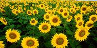 SpikeToronto/Flowers