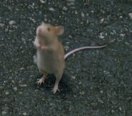 Standing Louis-Is Baby Mouse