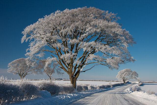 File:A Winter's Tale.jpg