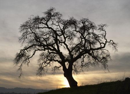 File:Gnarled tree.jpg