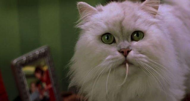 File:Stuart Little 1999 Trailer.jpg