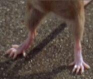 Mouse'sFeetLooksSpikyInGarfield