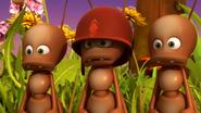 Fugax Ants (Maya)