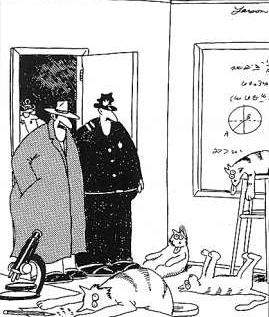 1985-09-25 - 'Curiosity Kills the Cats'