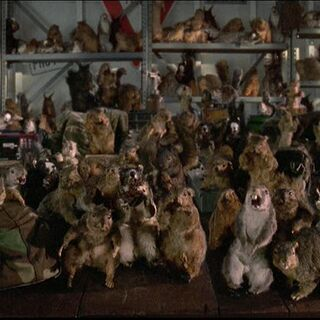 Squirrel Army during a meeting