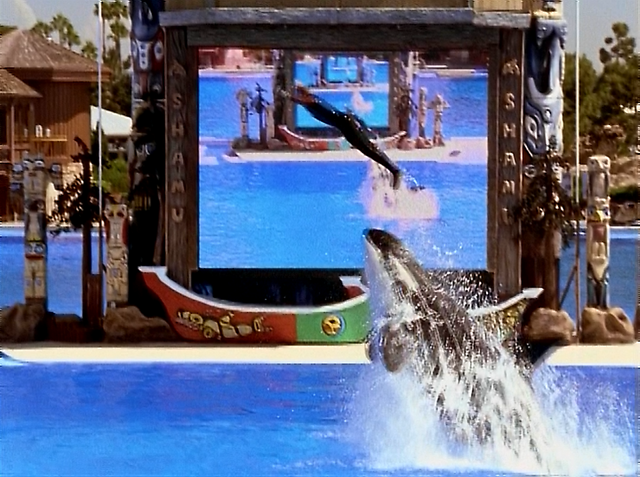 File:3x2 Sean and whale jump.png