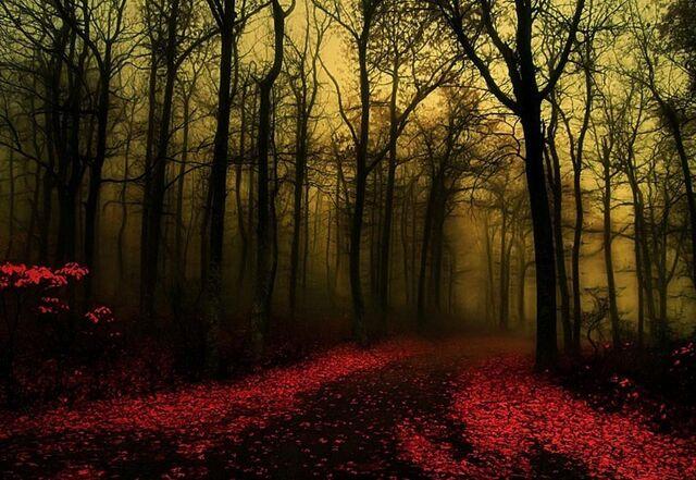 File:Dawn-Forest-Wallpaper.jpg