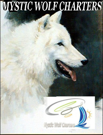 File:White Wolf Study466.jpg