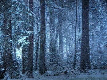 Snowy forest wallpaper o1jkh1