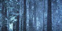 Silver Wilderness