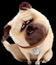 Mel dog