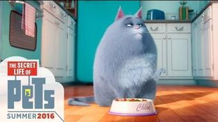 The Secret Life of Pets - Meet Chloe (HD) - Illumination