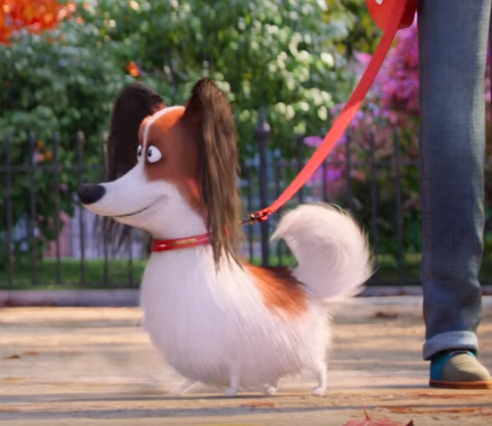 File:The papillon.png