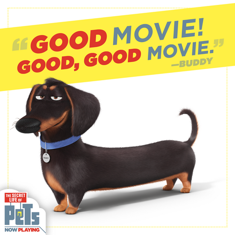 File:Good Movie Buddy.png
