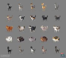 Many straycats