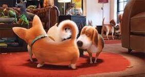 Dogs Around