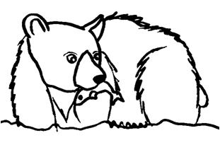 Grizzlycharartmale