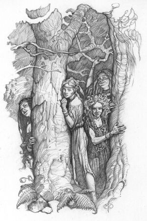 Forestwendronwitches2