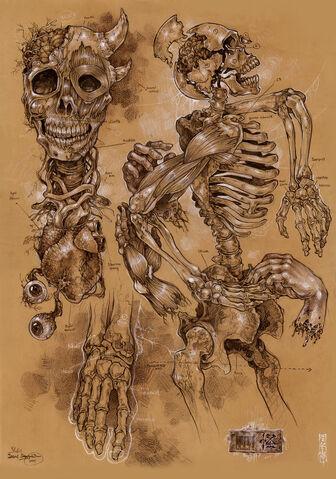 File:Demon anatomy by Alizel.jpg