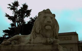 LOH-lion3