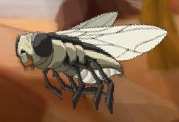Sand Fly Familiar