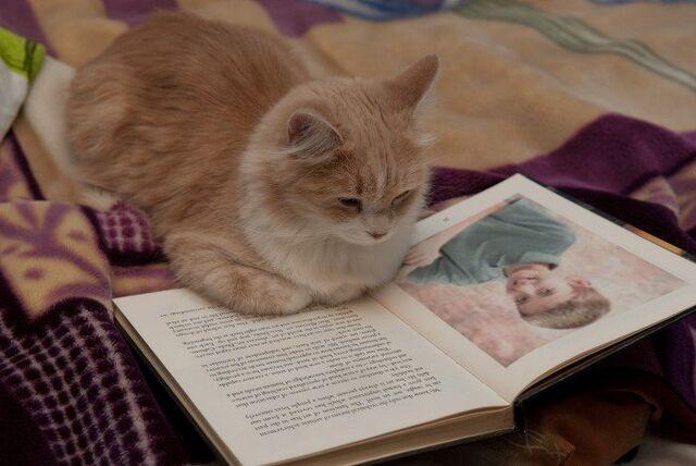 File:Cat got Dylan pic in a book 2011.jpg