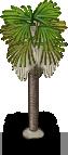 Palm Tree -3-