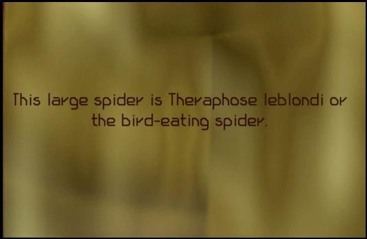 File:SpiderPlaque.jpg
