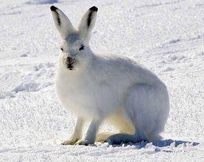 Kar hayvanlari 04