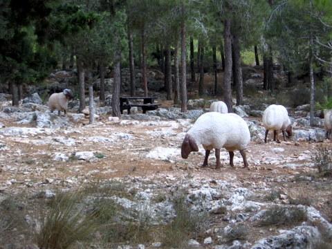 קובץ:פסלי כבשים בחניון יד קנדי.JPG