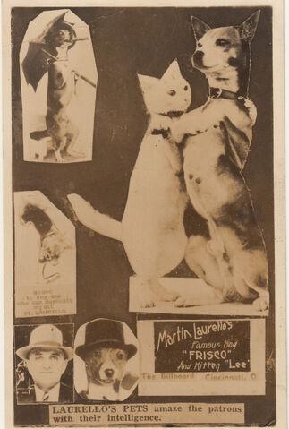 File:Laurellos-pets-postcard.jpg