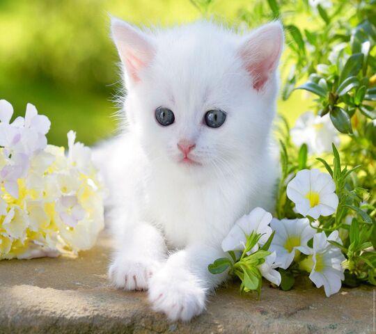 File:Kitty in flowers.jpg