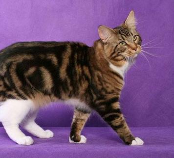 File:Cat.42.png