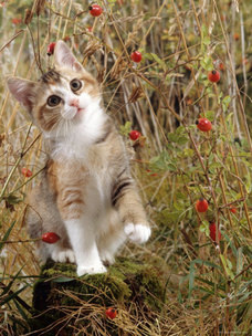 File:Cattree.8.jpg