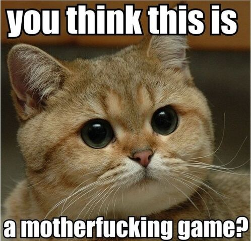 File:You-think-this-is-a-motherfucking-game-cat-1-.jpg