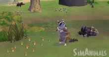 4964 raccoonSimAnimals 1