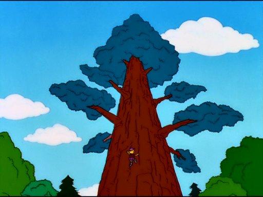 File:Springfield's oldest redwood tree.jpg