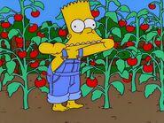 Bart farm snapshot
