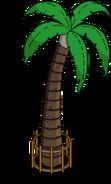 Palmtreek