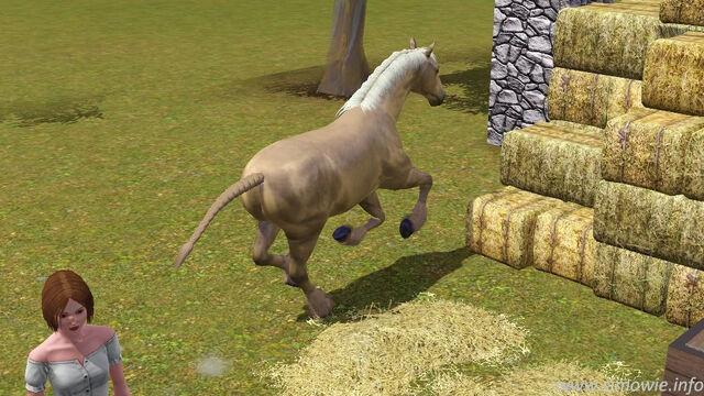 File:Horsepic.jpg