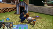 Interactions between owner and pet