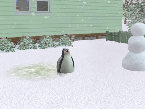 File:Penguin plump.jpg