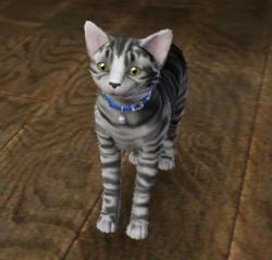 Cyril Elmore cat