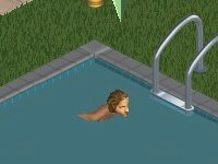 File:Swimming pool.PNG