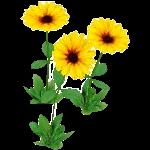 File:Wildflower Black Eyed Susan.png