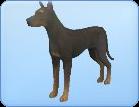 Breed-l29
