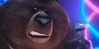 Bears/Gallery