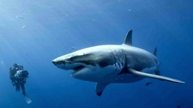 Return of Jaws - Shark Week 2013