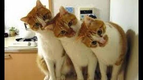 Funny cats 2013